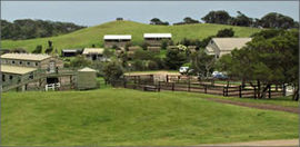 Ace Hi Riding Ranch - Accommodation Georgetown
