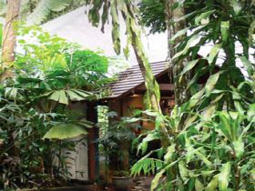 Heritage Lodge and Spa - In the Daintree - Accommodation Georgetown