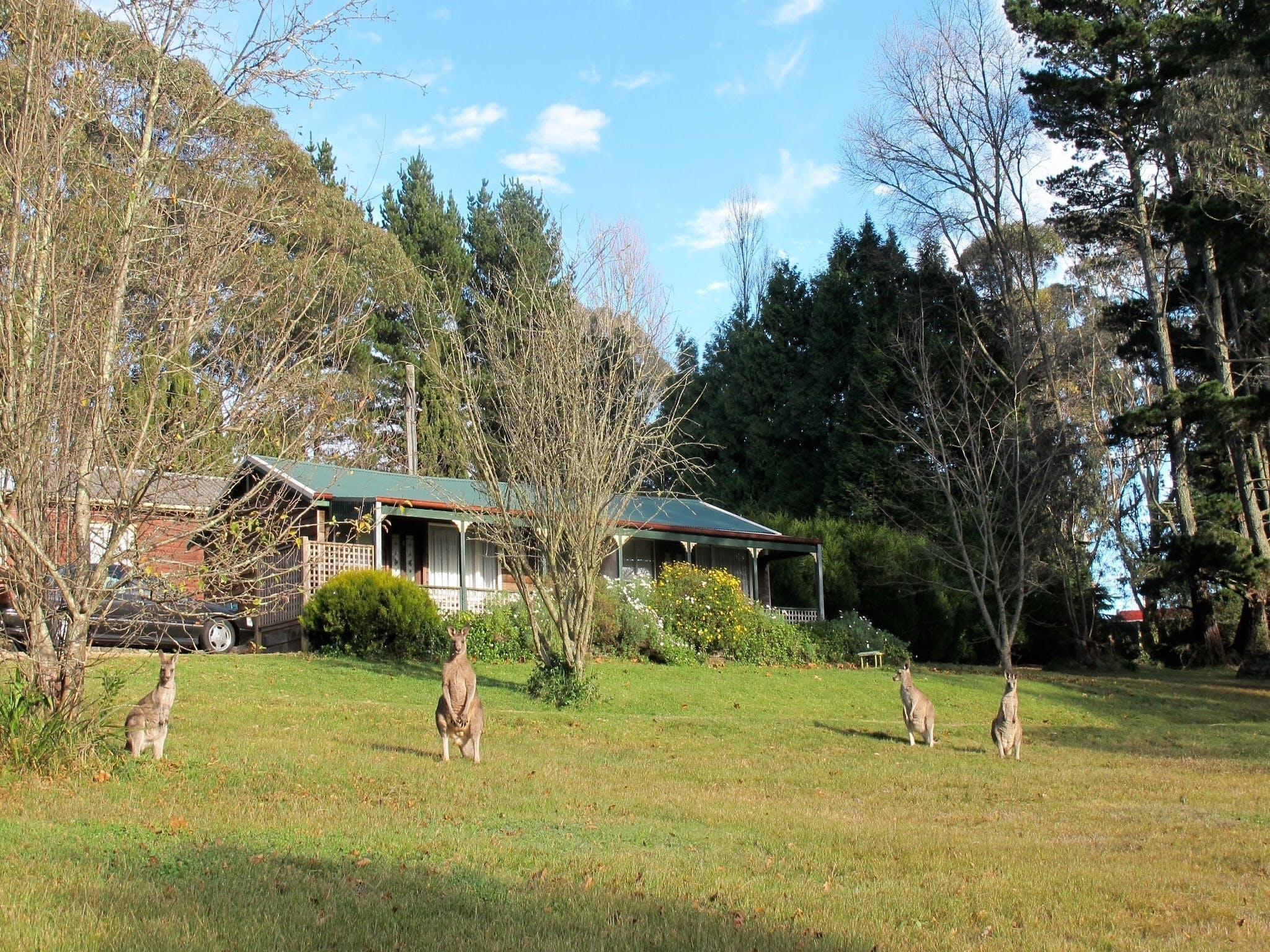 Cedar Lodge Cabins - Accommodation Georgetown