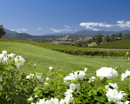 Balgownie Estate Vineyard Resort and Spa - Accommodation Georgetown