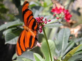 Butterfly Farm - Accommodation Georgetown
