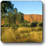 Uluru - Kata Tjuta National Park - Accommodation Georgetown