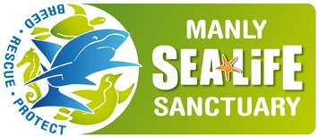 Manly SEA LIFE Sanctuary - Accommodation Georgetown