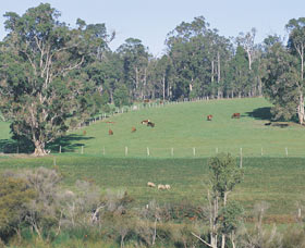 Scenic Drives - Bunbury Collie Donnybrook - Accommodation Georgetown