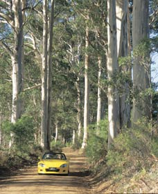 Mount Shadforth Scenic Drive - Accommodation Georgetown