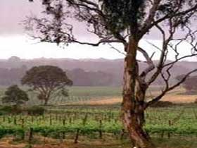Yangarra Estate Vineyard - Accommodation Georgetown