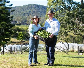 Hinterland Feijoas - Accommodation Georgetown