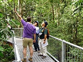 Daintree Discovery Centre - Accommodation Georgetown