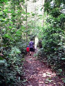 Malanda Falls Rainforest Walk Malanda Falls Conservation Park - Accommodation Georgetown