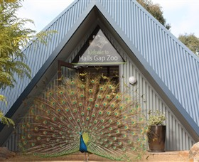 Halls Gap Zoo - Accommodation Georgetown