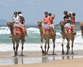 Camel Rides with Coffs Coast Camels - Accommodation Georgetown