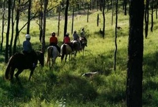 Hunter Valley Horse Riding and Adventures - Accommodation Georgetown