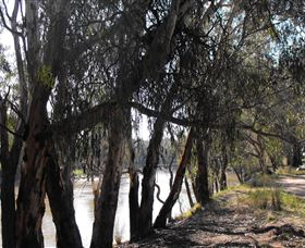 Mia Forest Drives Narrandera - Accommodation Georgetown