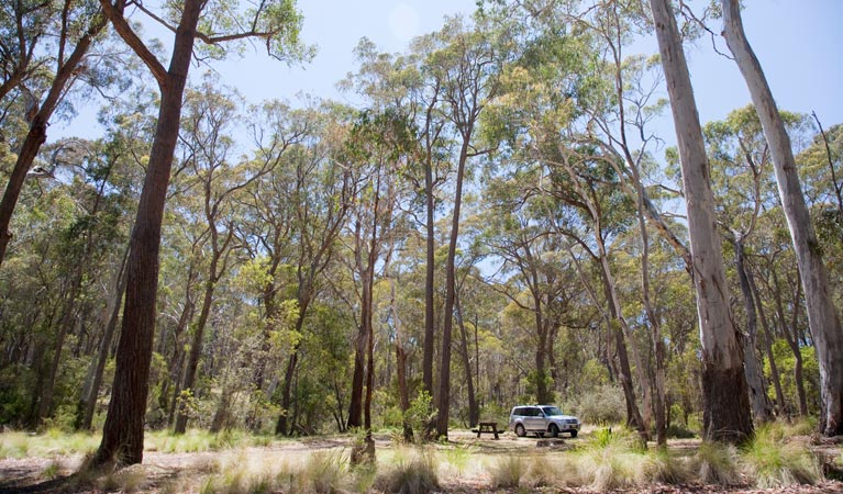 Coolah Tops National Park - Accommodation Georgetown