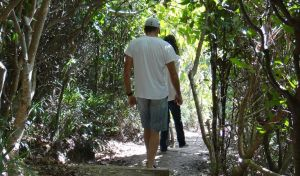 Three Sisters walking track - Accommodation Georgetown