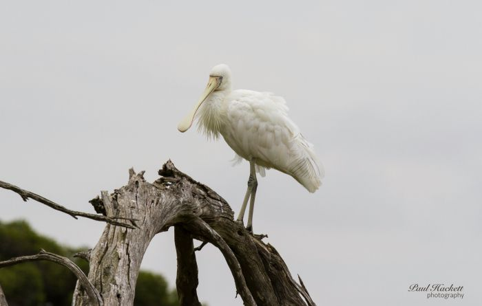 Melbourne Birding Tours - Accommodation Georgetown
