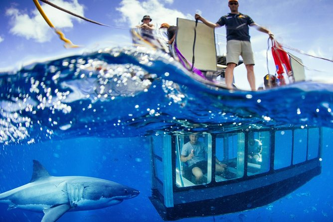 White Shark Tour with Optional Cage Dive from Port Lincoln - Accommodation Georgetown