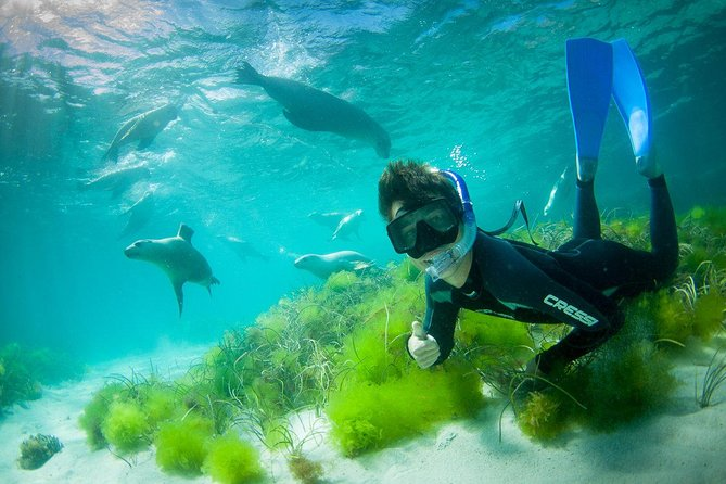 Half-Day Sea Lion Snorkeling Tour from Port Lincoln - Accommodation Georgetown