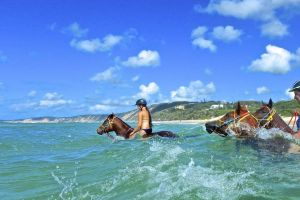 Horse Swimming Ride from Rainbow Beach - Accommodation Georgetown