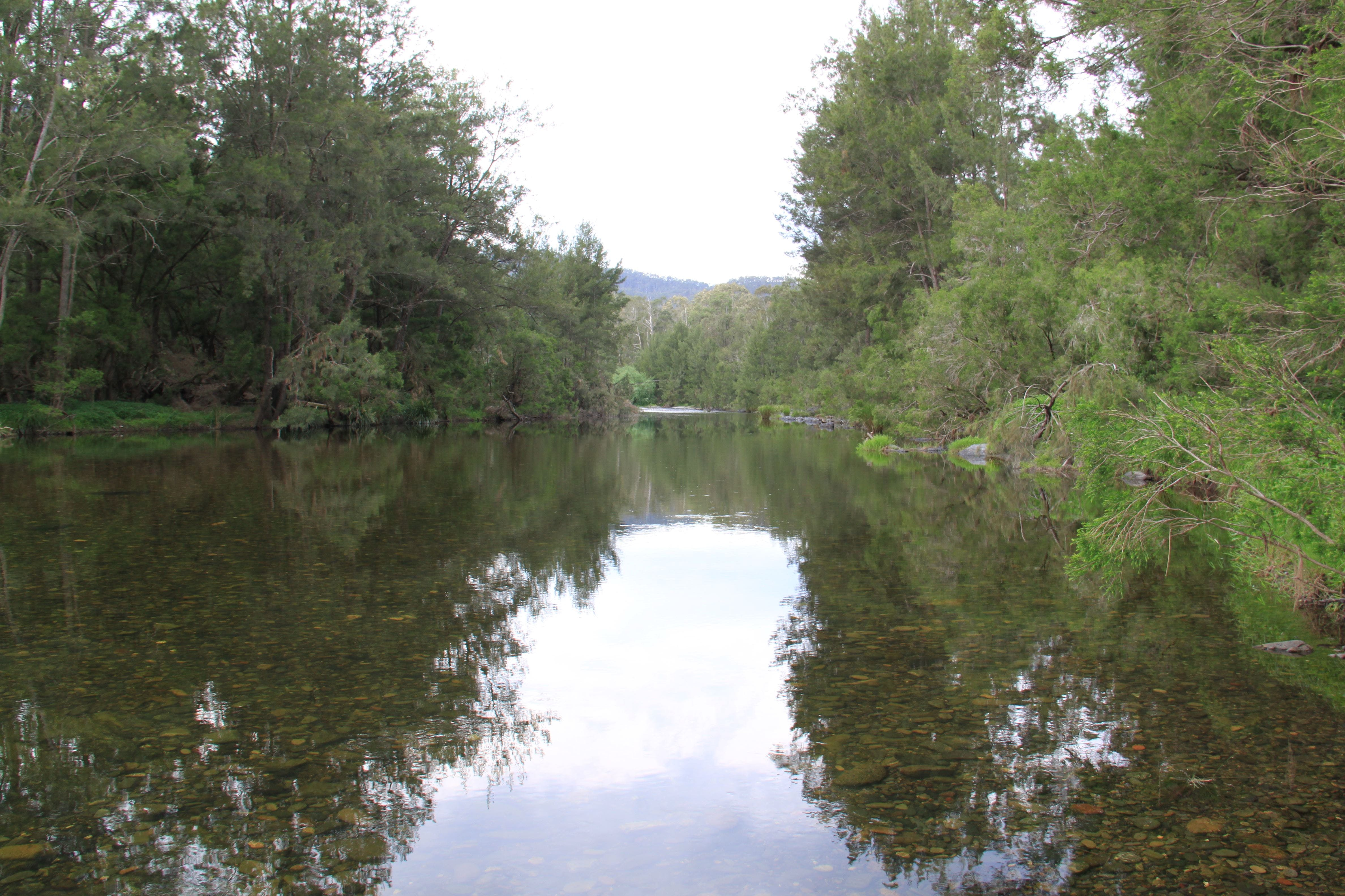 Riverside Campground and Picnic Area - Accommodation Georgetown