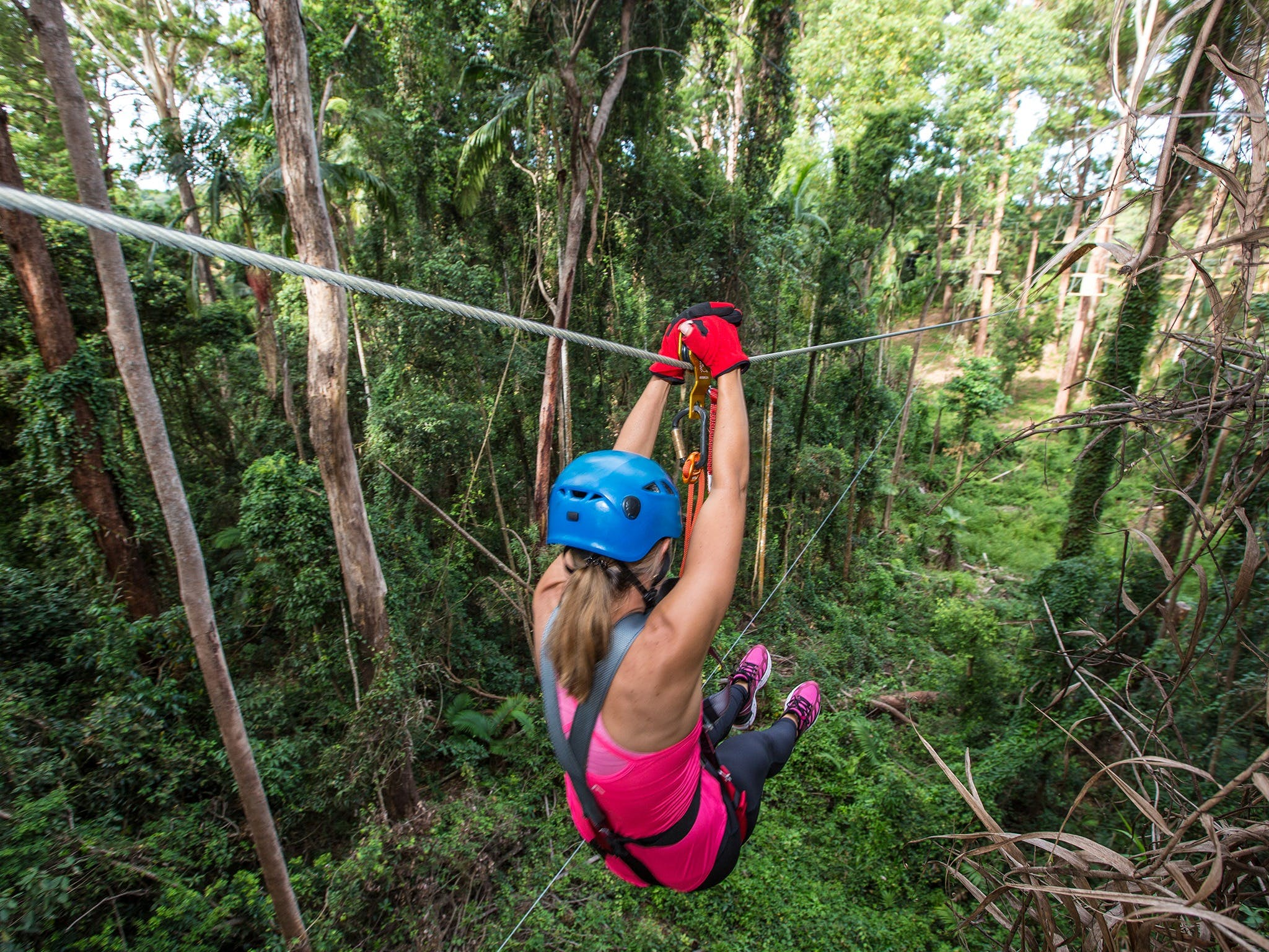 TreeTop Challenge - Sunshine Coast - Accommodation Georgetown