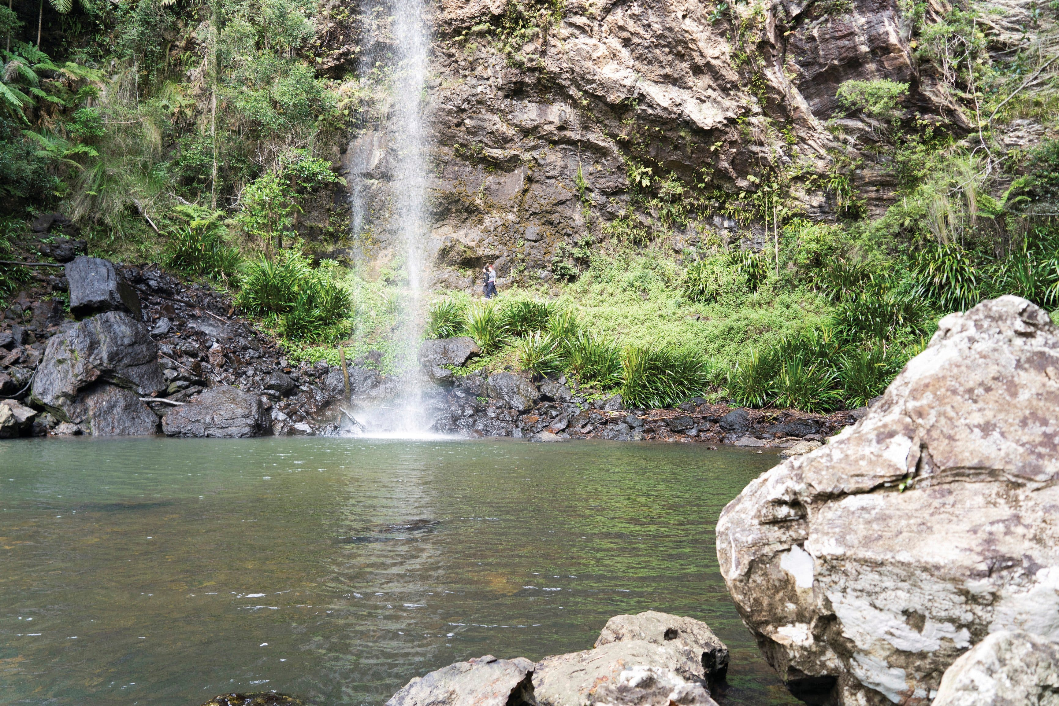 Twin Falls Circuit Springbrook National Park - Accommodation Georgetown