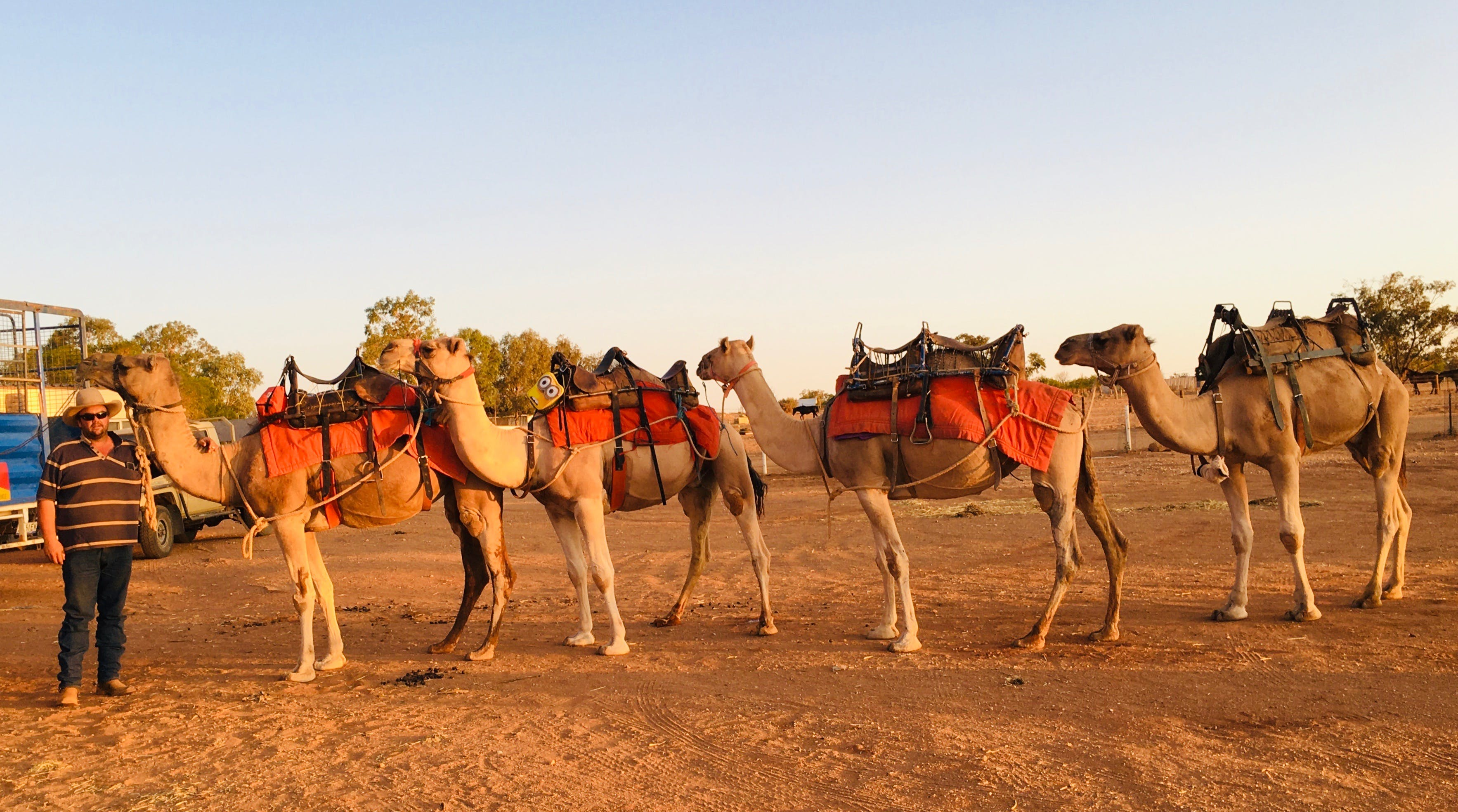 Broken Hill Camels - Accommodation Georgetown