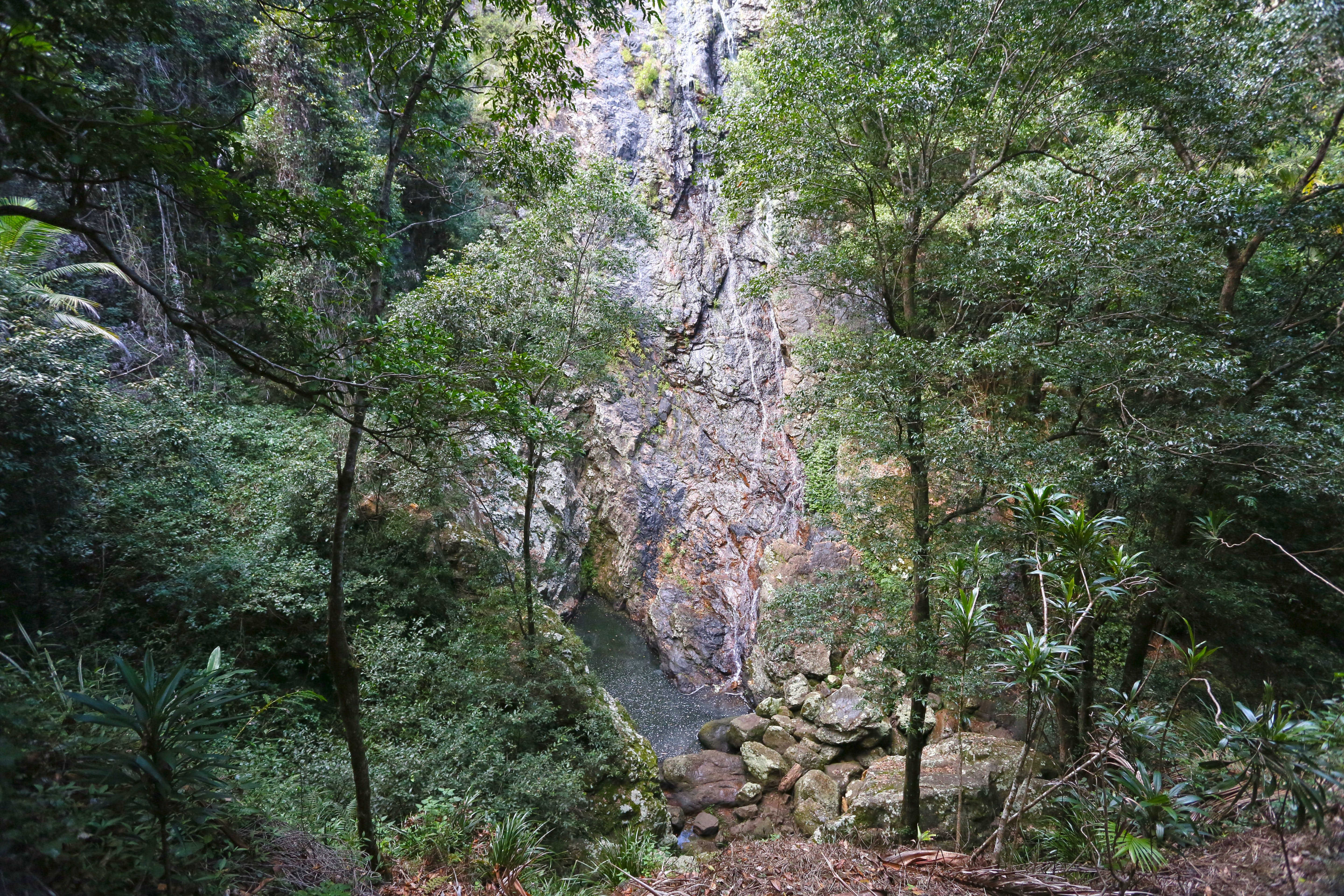 Kondalilla Falls Circuit Kondalilla National Park - Accommodation Georgetown