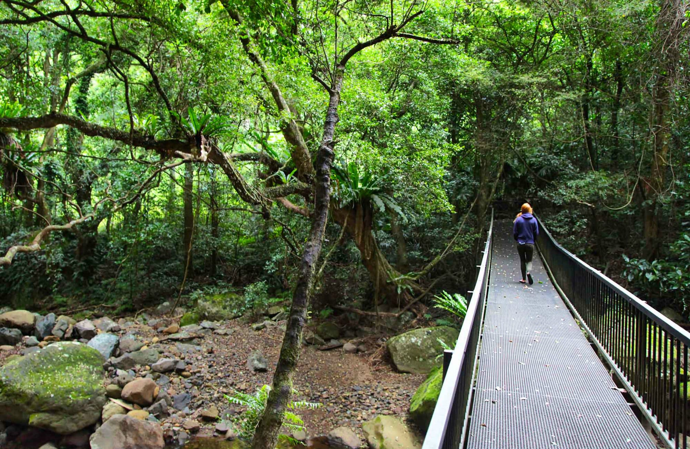 Rainforest Loop Walk Budderoo National Park - Accommodation Georgetown
