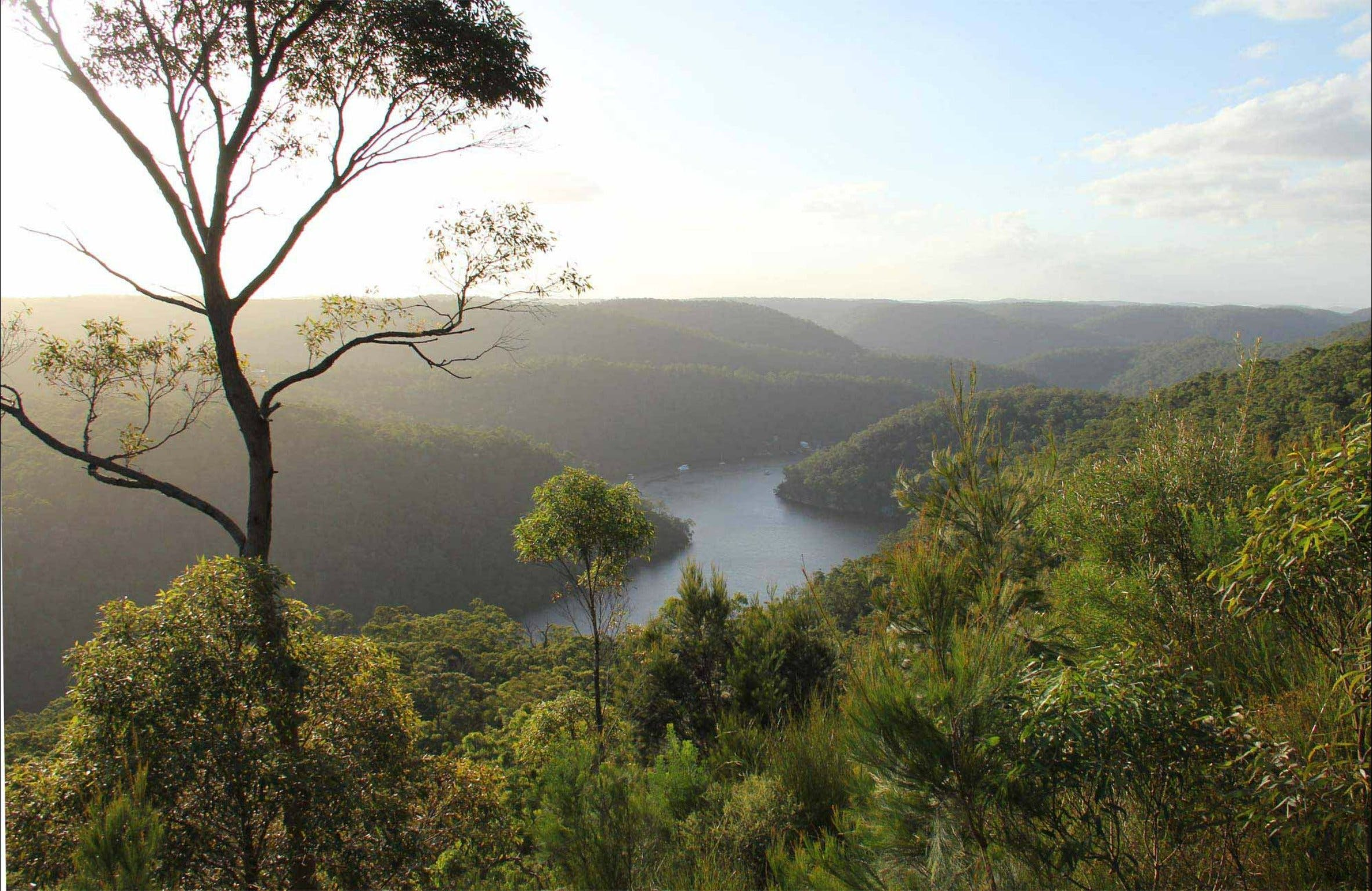Great North walk - Berowra Valley National Park - Accommodation Georgetown