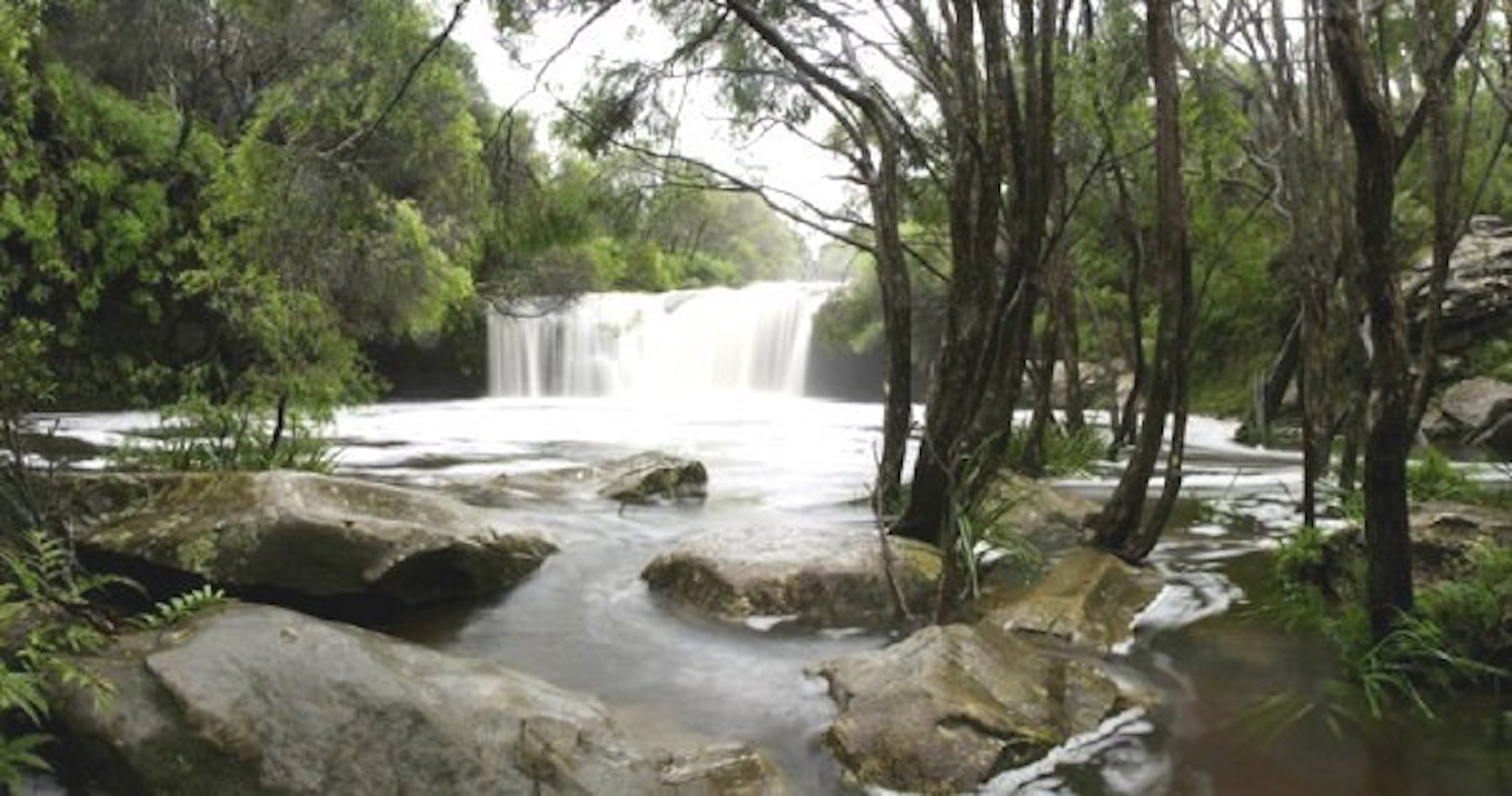 Nellies Glen Carrington Falls - Accommodation Georgetown