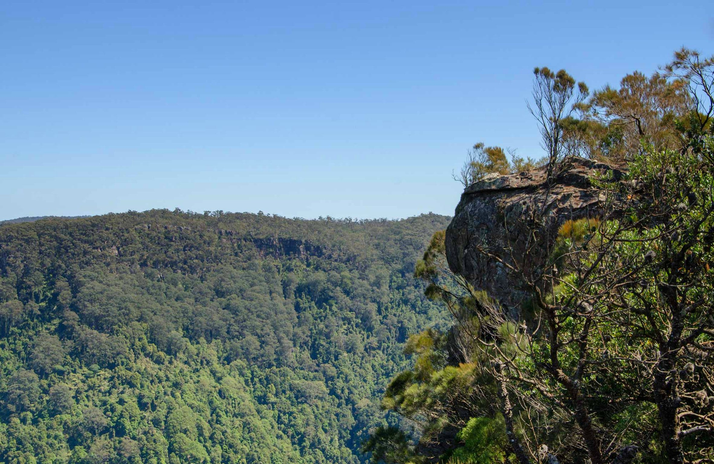 Cooks Nose Walking Track - Accommodation Georgetown