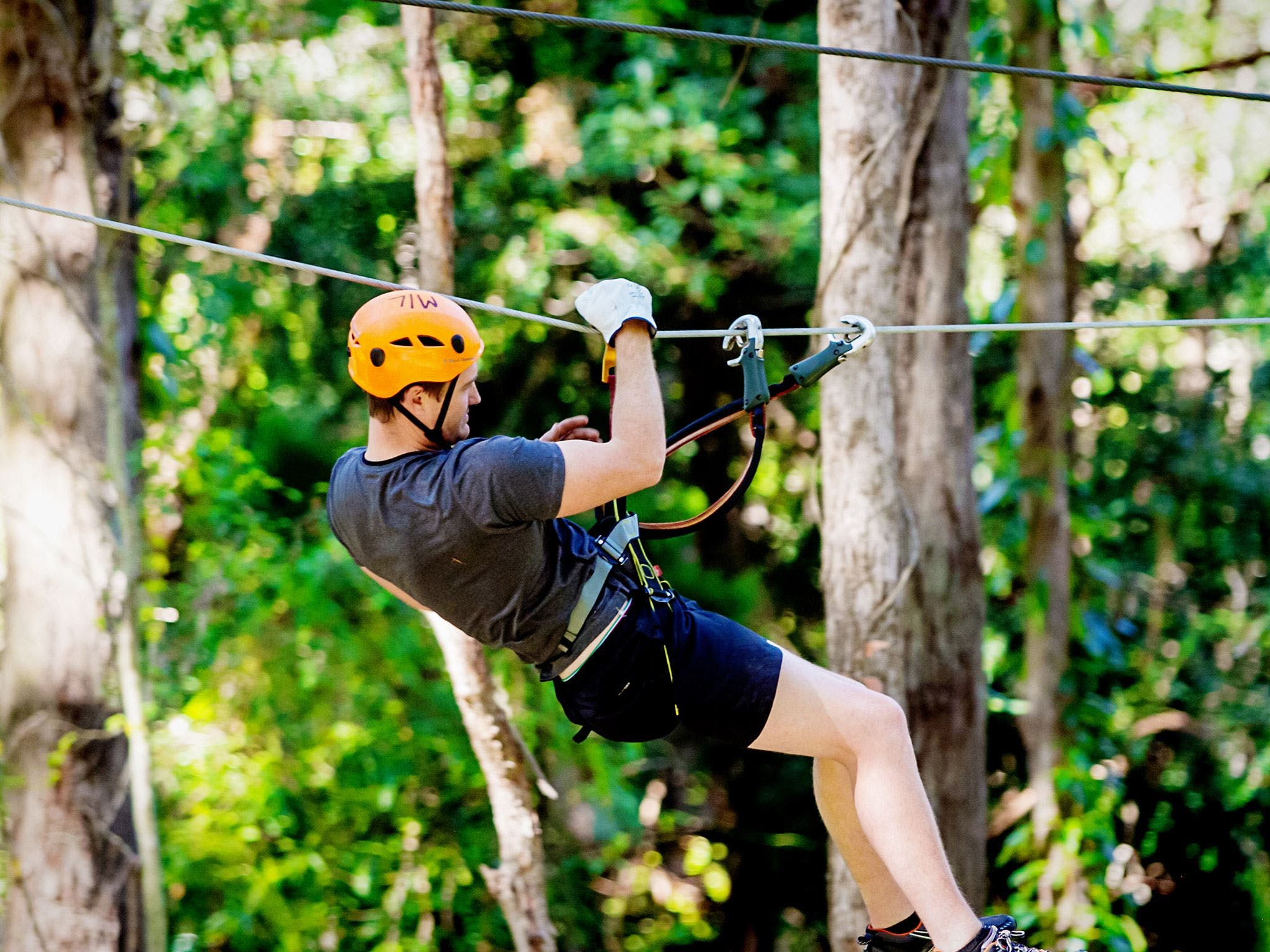 TreeTop Challenge Currumbin Wildlife Sanctuary - Accommodation Georgetown