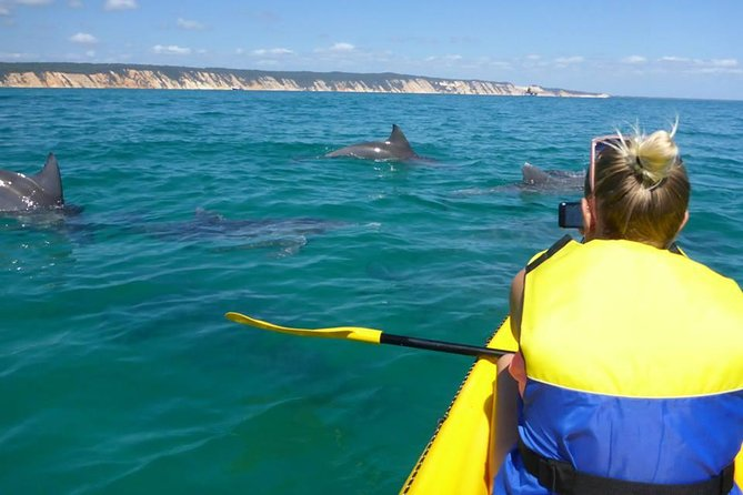 Kayak with Dolphins and 4WD Great Beach Drive Day Trip from Noosa - Accommodation Georgetown