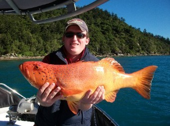 Gone Fishing by Coral Sea Fishing Charters Airlie Beach - Accommodation Georgetown