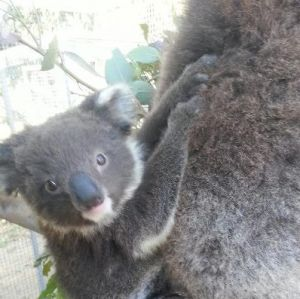 West Oz Wildlife Petting Zoos - Accommodation Georgetown