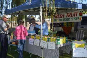 Corowa Rotary Federation Festival Market - Accommodation Georgetown