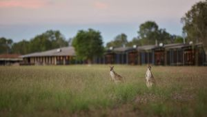 Wildman Wilderness Lodge - Accommodation Georgetown