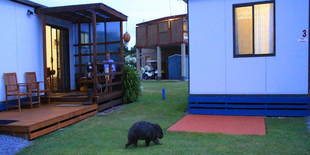 BIG4 Kelso Sands Holiday  Native Wildlife Park - Accommodation Georgetown